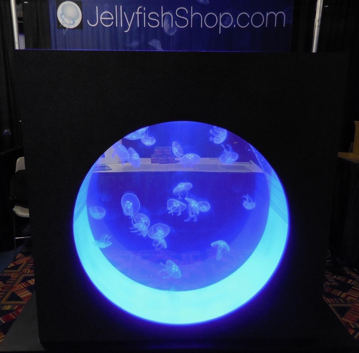 Jellyfish aquarium for sale : Parts auto online